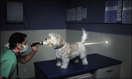 military doggie